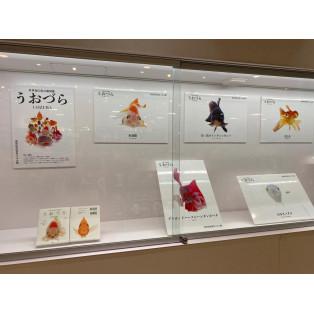 【ギャラリー紹介】世界初の魚の顔図鑑うおづら展