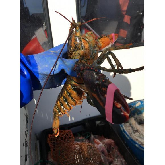 アメリカへ〜ロブスター漁に行ってきました☆