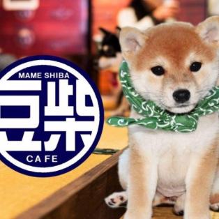 【本館5階】 豆柴カフェ 本日(10/15)分のご入場チケットは完売致しました。 明日(10/16)分のチケットは、AM10:30より本館5階豆柴カフェ店頭にて販売いたします。