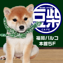 【NEW OPEN】豆柴カフェ