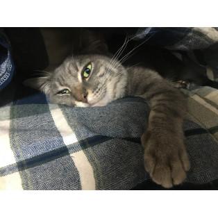 番外編。スタッフの猫ちゃん、たむたむ。