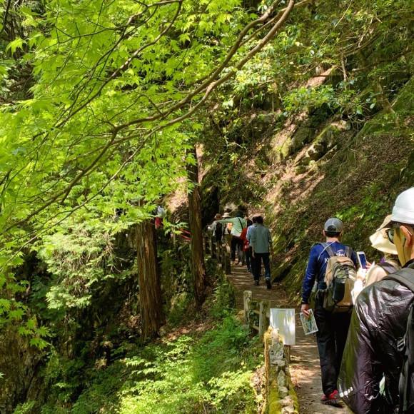 「三段峡野外博物館に行こう」苔の世界と春の野花にであう旅【前編】|イベントレポート