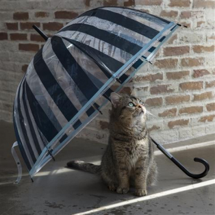 【レイングッズ】傘