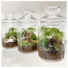 【8/20 NEW OPEN】Terrariums by Feel The Garden