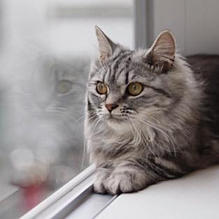 猫キャスト紹介★マリル編