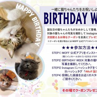 猫ちゃんの誕生日イベント開催中!