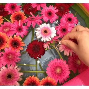 日比谷花壇プチ縁日~ガーベラすくい♪