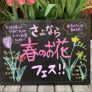 春のお花たち♪♪