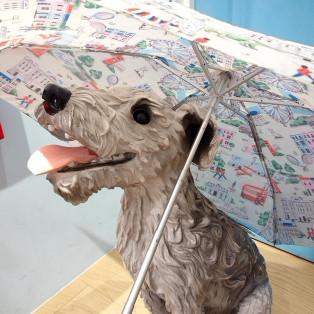 晴れの日にも✨傘