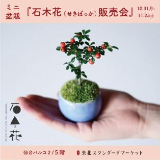 ミニ盆栽・石木花(せきぼっか)販売会!