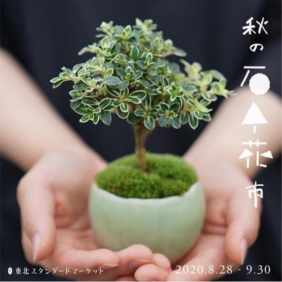 ミニ盆栽販売会「秋の石木花」開催中です!