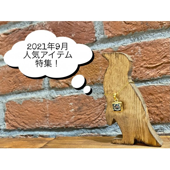 先月に続き第2弾!!('ω')