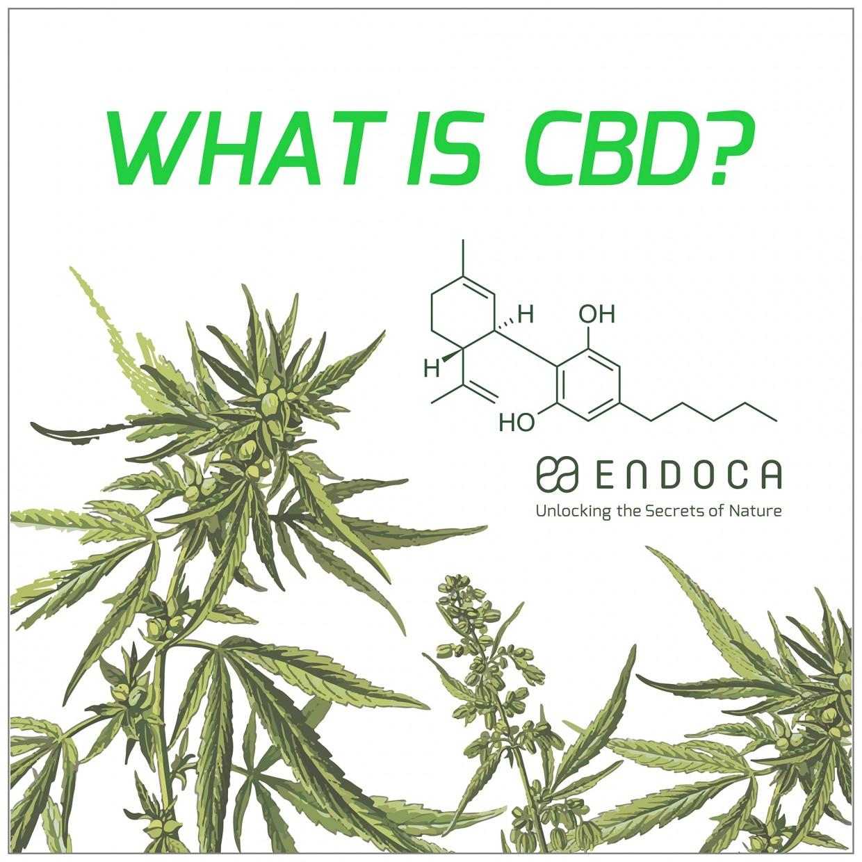 「WHAT IS CBD ?」ENDOCA POP UP STORE