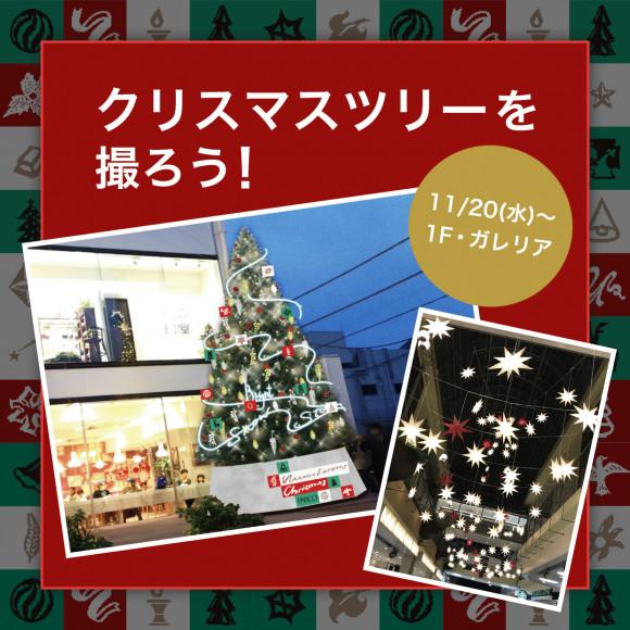 クリスマスツリーで写真を撮ろう!