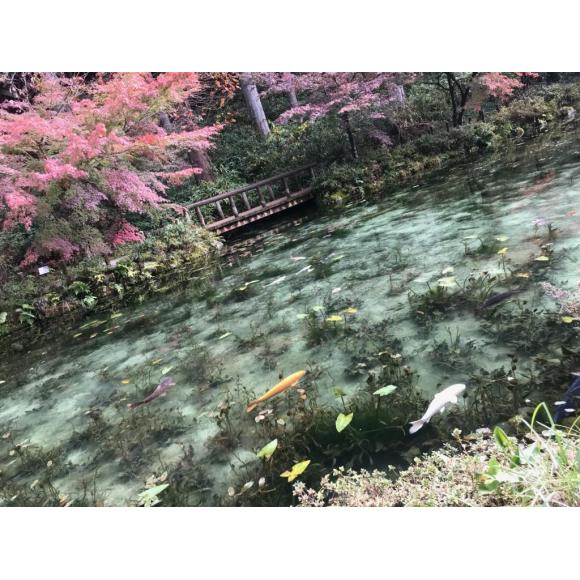 岐阜旅行☆モネの池☆紅葉が美しい♪旅行にはマツエクが楽ちん(*´ω`*)