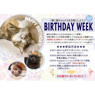 猫ちゃんの誕生日イベント開催のお知らせ