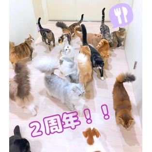 ◌ ♡モフアニマルカフェ静岡店2歳♡ ◌