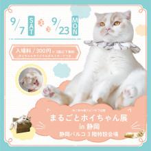 【9/7(土)~】ねこ休み展スピンオフ企画「まるごとホイちゃん展 in 静岡」開催!!