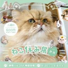 【4/20(土)~】『ねこ休み展 in 静岡』開催!