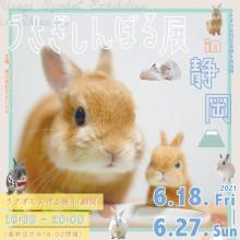 【6/18(金)~】「うさぎしんぼる展」開催!