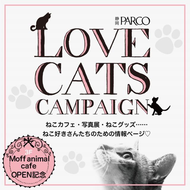 LOVE CATS CAMPAIGN