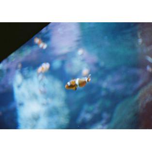 [フィルムを楽しもう]Lomographyで撮る水族館