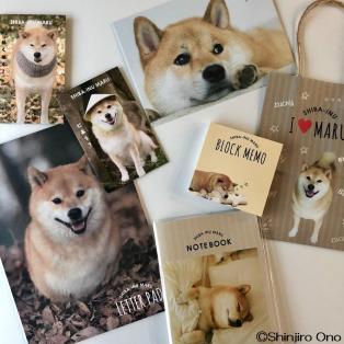 柴犬まるコラボ商品