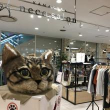 【期間限定ショップのお知らせ】鎌倉ねこサロン