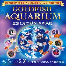 ~金魚と光で彩るミニ水族館~ 『GOLDFISH AQUARIUM』開催!